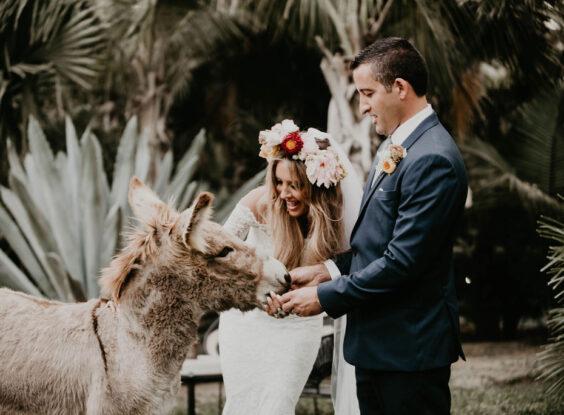Acre donkey couple photo session Boho wedding Cabo